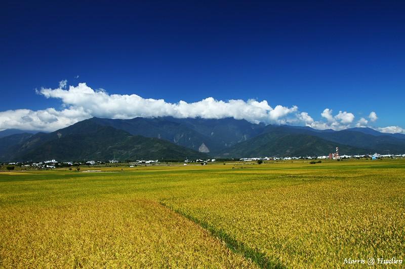 花東縱谷的稻香味 (25)
