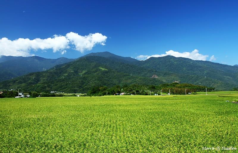 花東縱谷的稻香味 (1)