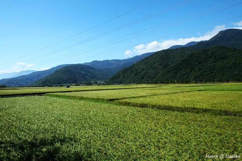 花東縱谷的稻香味 (2)