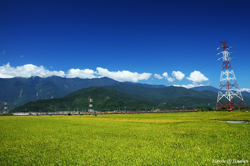 花東縱谷的稻香味 (13)