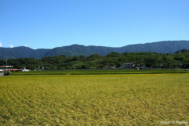 花東縱谷的稻香味 (26)
