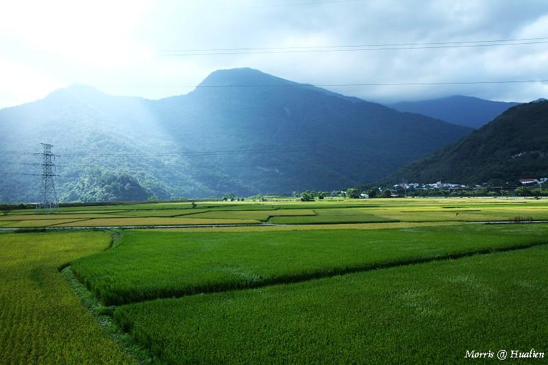 花東縱谷的稻香味 (46)