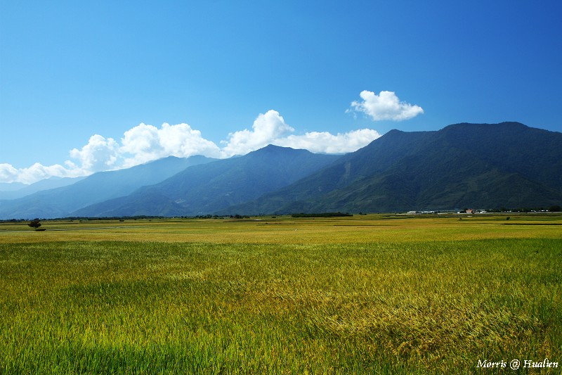 花東縱谷的稻香味 (24)