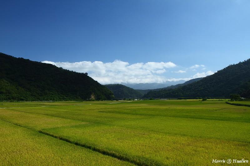 花東縱谷的稻香味 (41)