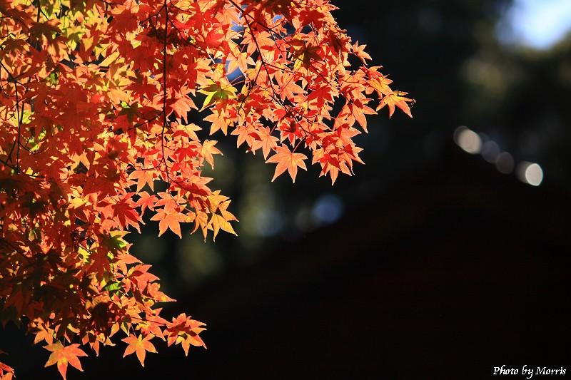 楓賞‧福壽山農場 (24)