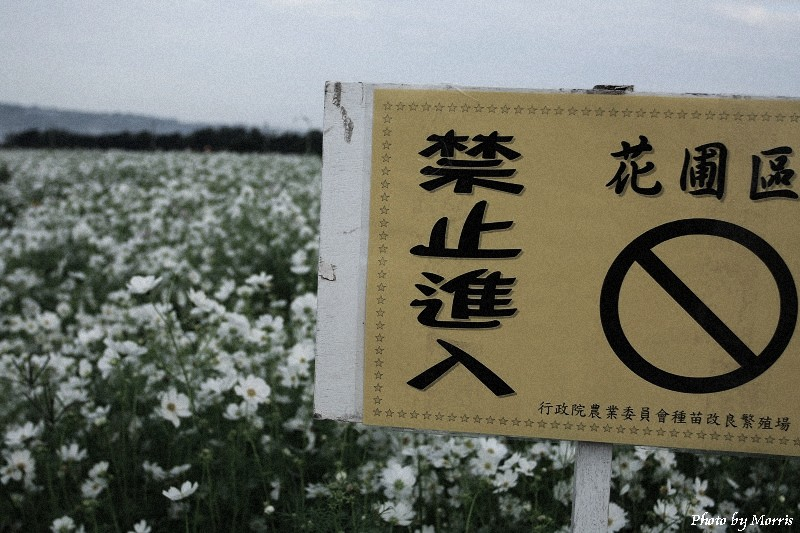 98新社花海 (04)
