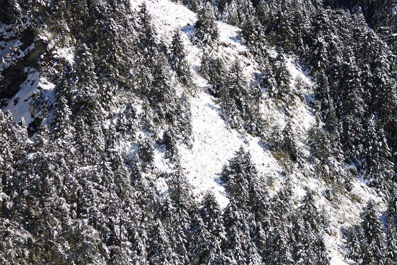 合歡山冬雪前奏曲 (82)