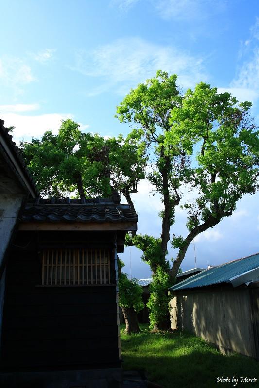 菁華街尋舊日式房舍 (03)
