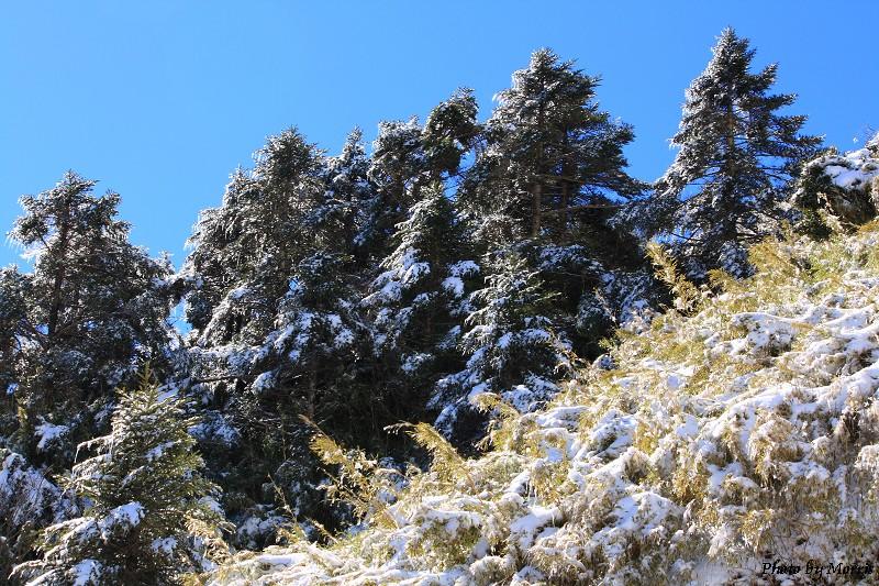 合歡山冬雪前奏曲 (35)