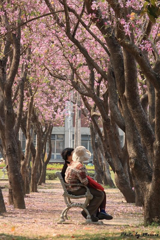 2010府城賞花季 (61)