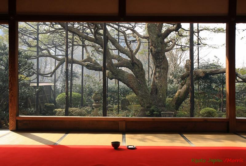 京都初心 Day 4 (2)
