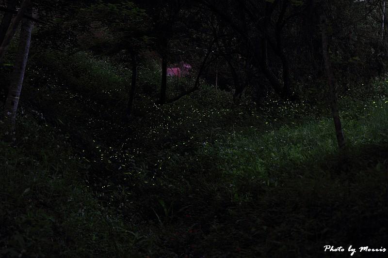 螢光點點 (3)