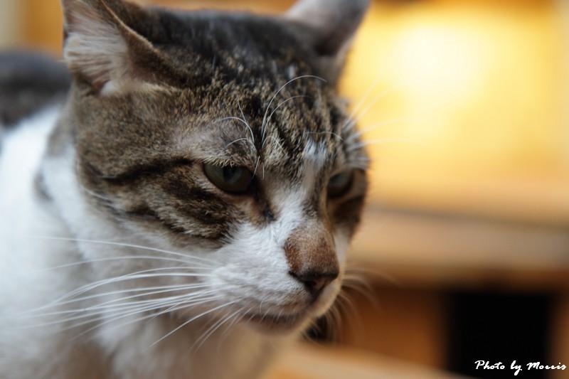 貓物語‧極簡咖啡 (37)