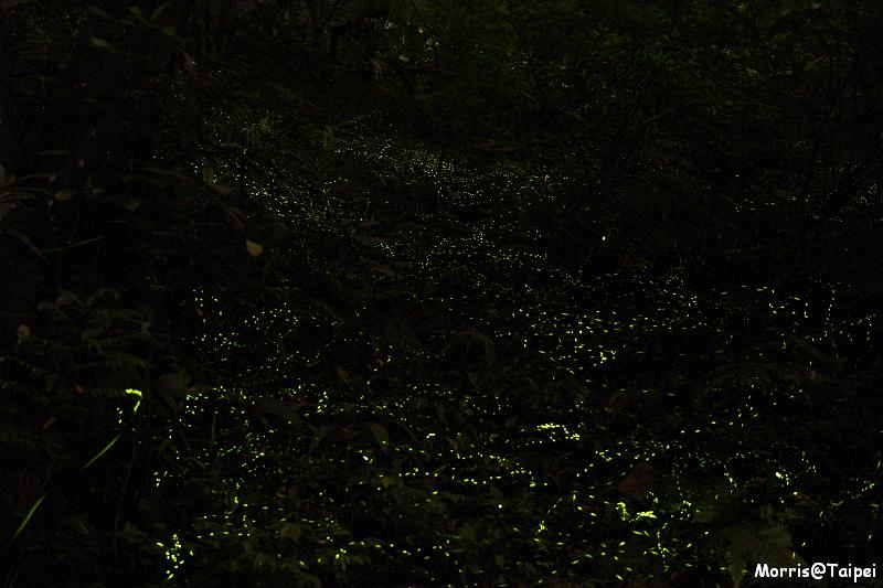 土城螢火蟲