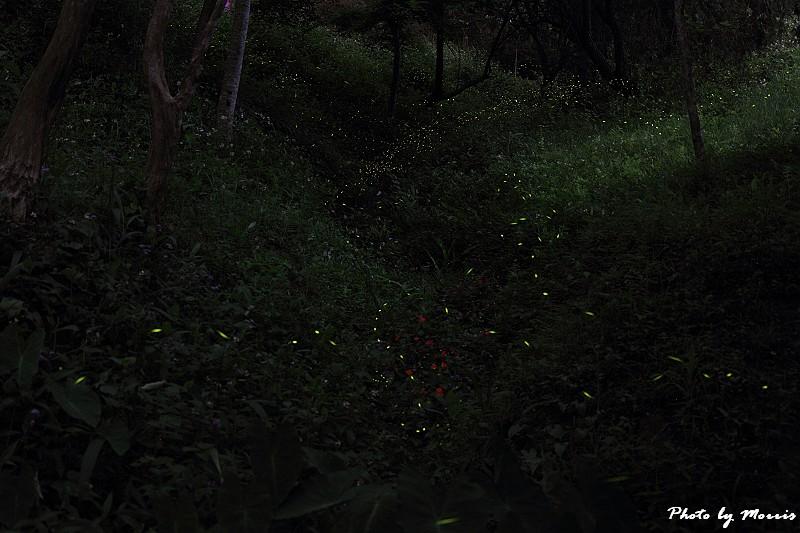 螢光點點 (2)