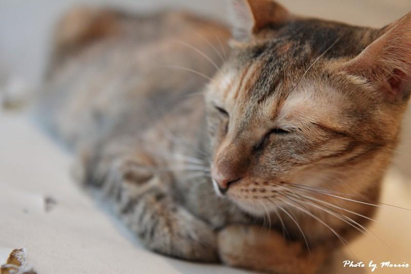 貓物語‧極簡咖啡 (25)