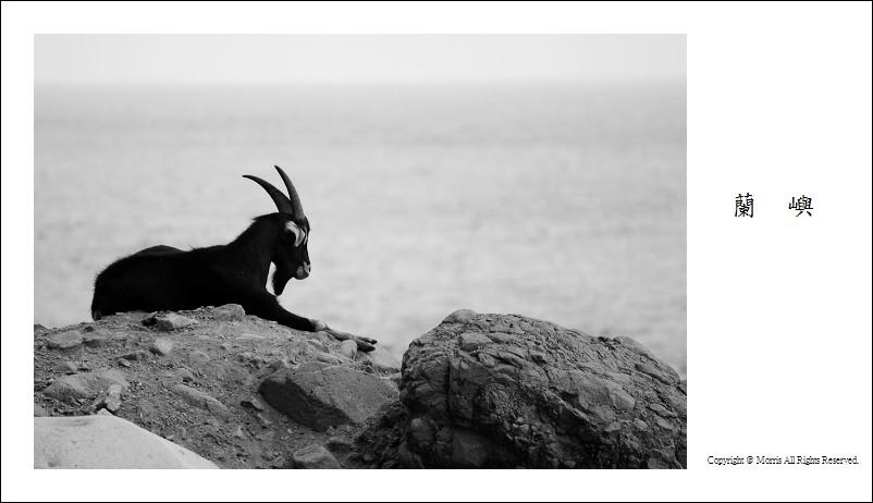 山羊的國度 (32)