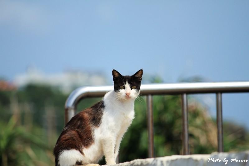 馬崗漁港拍貓看海 (02)