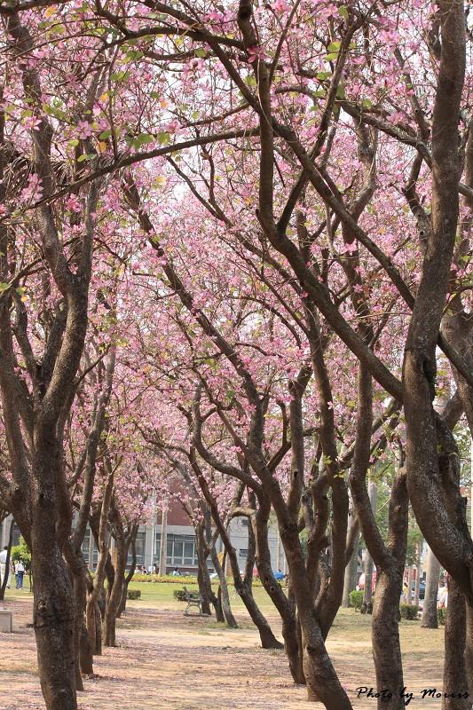 2010府城賞花季 (60)