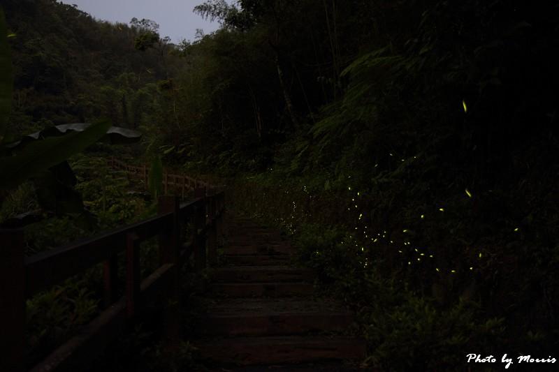 螢光晚會 (1)