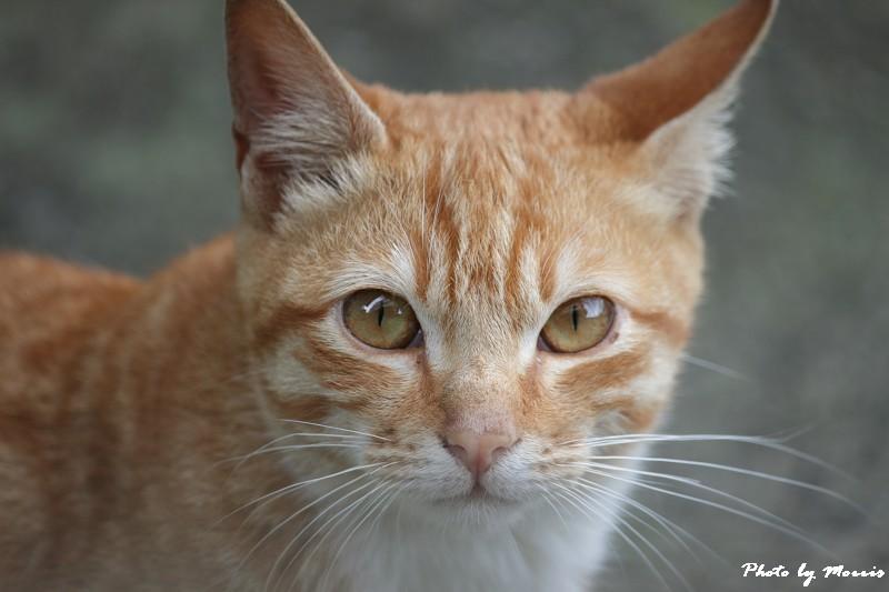 金瓜石的貓兒們 (19)
