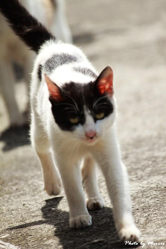 馬崗漁港拍貓看海 (38)