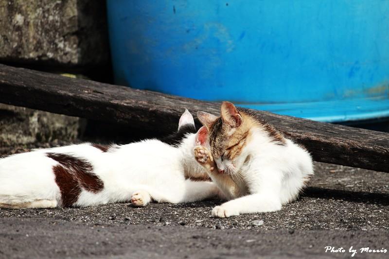馬崗漁港拍貓看海 (26)
