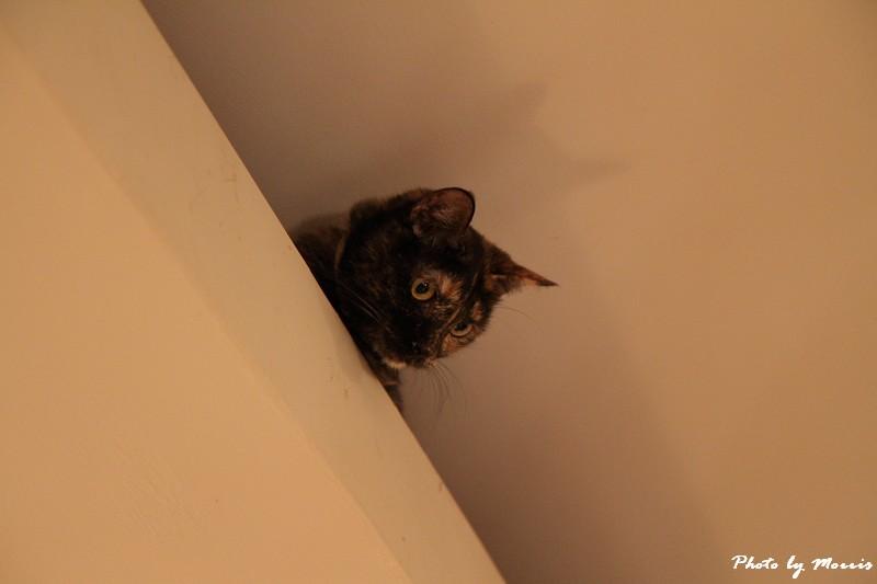 貓物語‧極簡咖啡 (46)