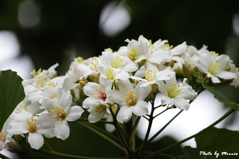 勝興車站苗49縣道 (31)
