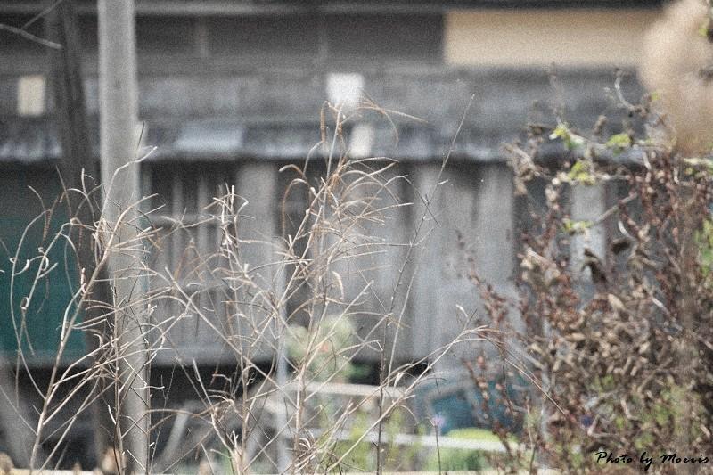 消失的台鹼宿舍 (31)