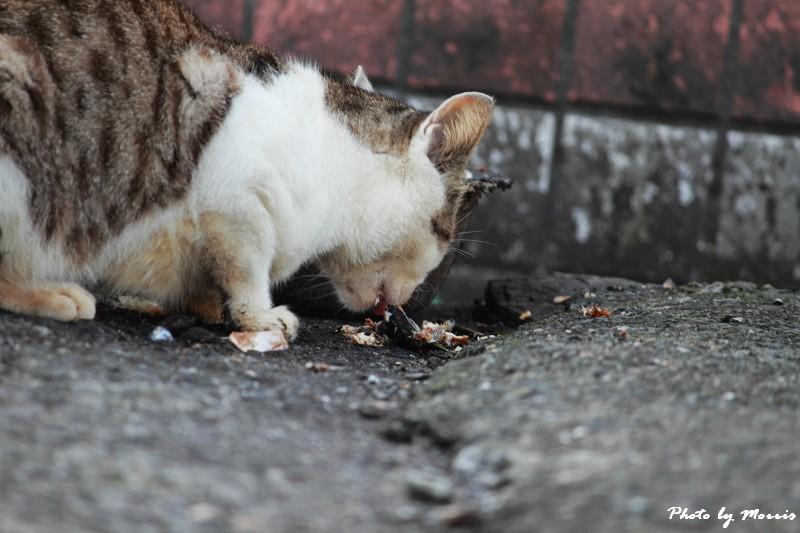 馬崗漁港拍貓看海 (45)