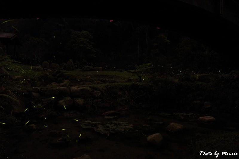 螢光晚會 (9)