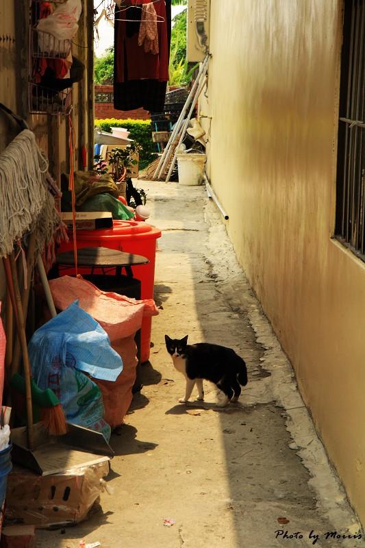 台西‧漫步彩色漁村 (74)