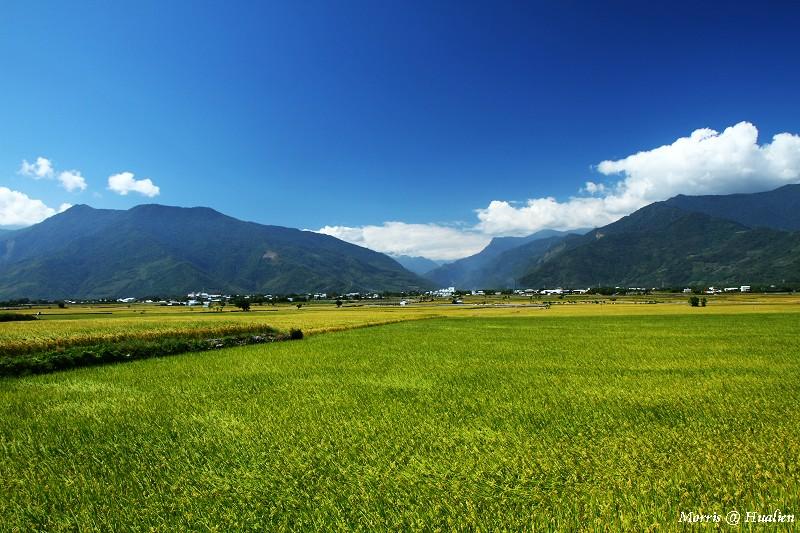 花東縱谷的稻香味 (32)