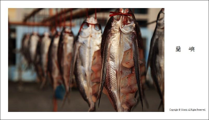 飛魚季 (15)