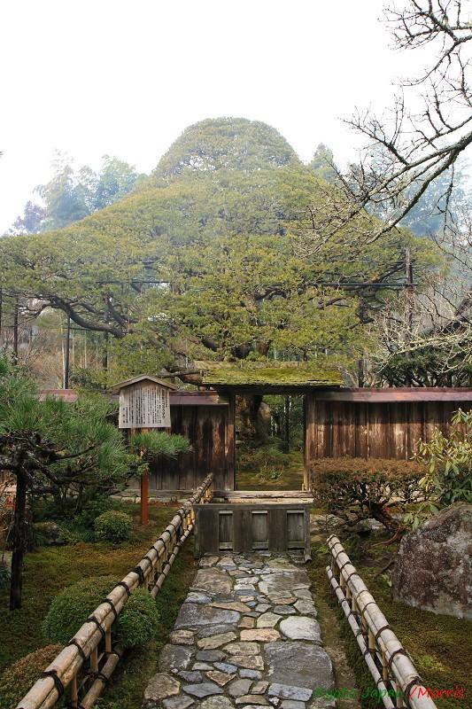 寶泉院 (5)