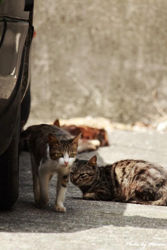 馬崗漁港拍貓看海 (12)