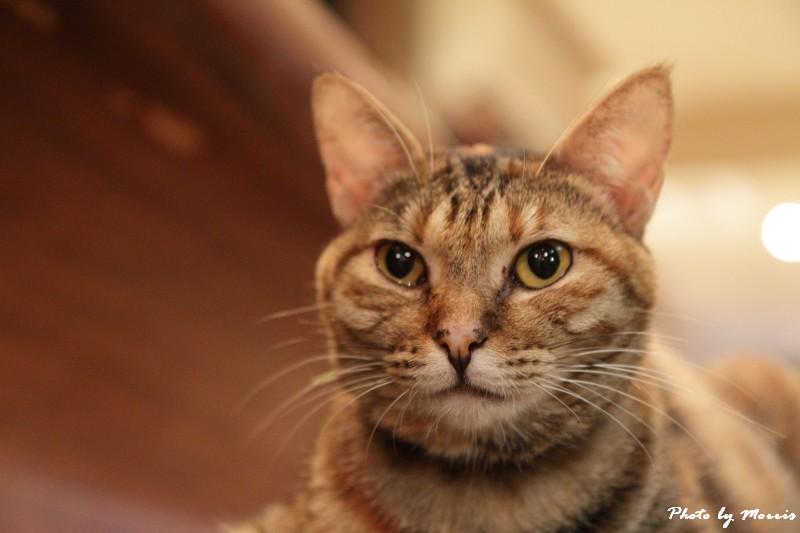 貓物語‧極簡咖啡 (34)