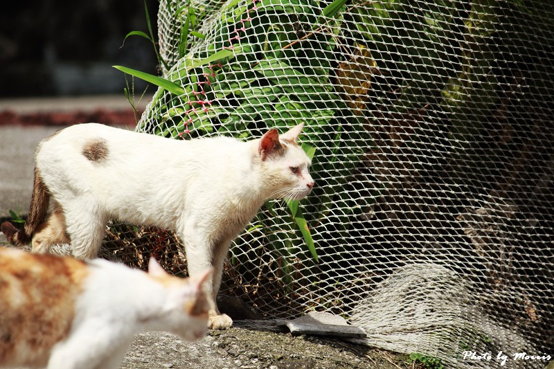 馬崗漁港拍貓看海 (29)