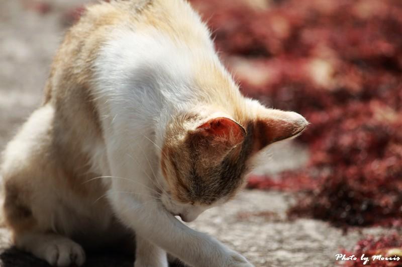 馬崗漁港拍貓看海 (39)