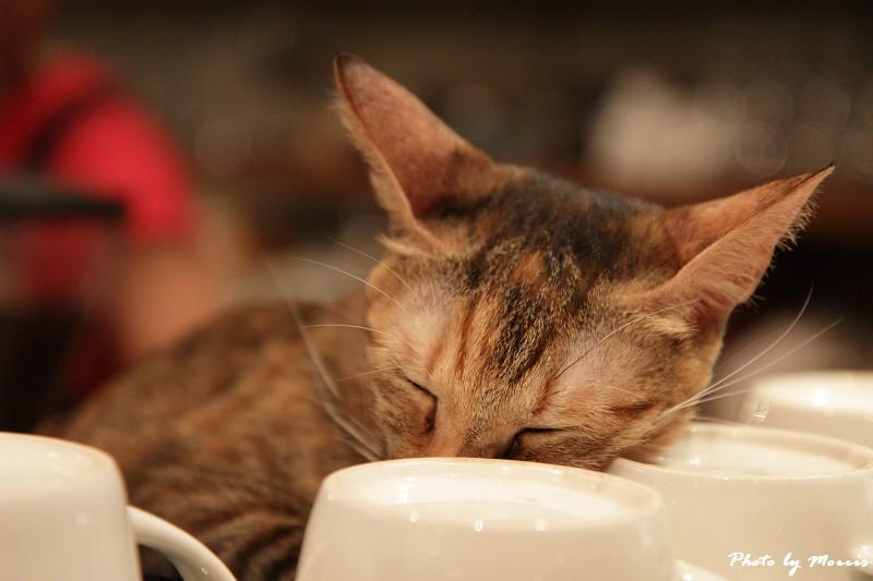 貓物語‧極簡咖啡 (45)