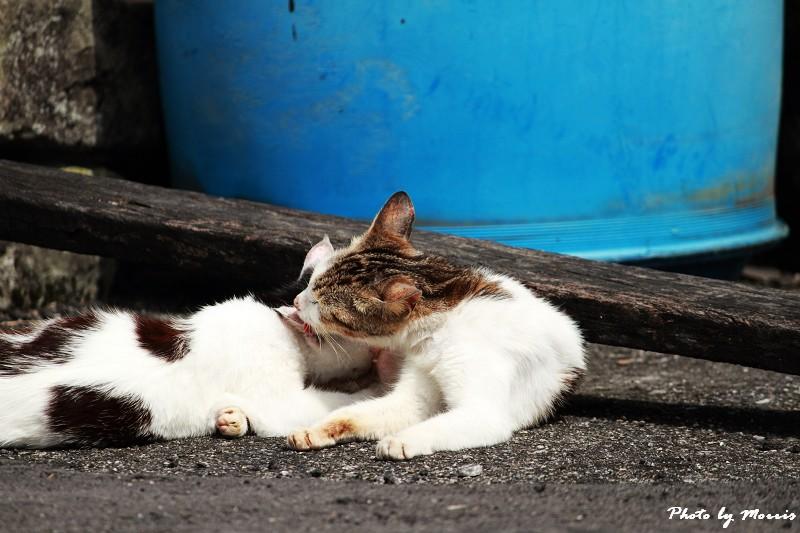 馬崗漁港拍貓看海 (25)