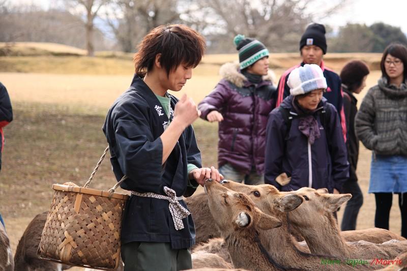 奈良 鹿寄 (51)