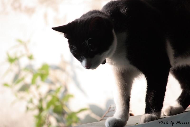 六號貓洞 (31)