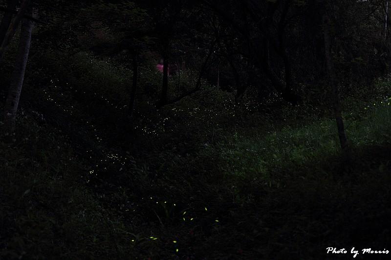 螢光點點 (4)