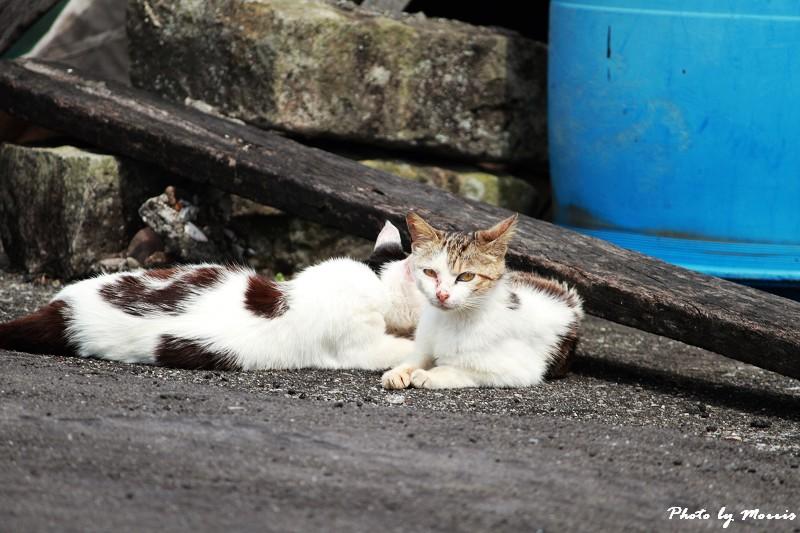 馬崗漁港拍貓看海 (23)