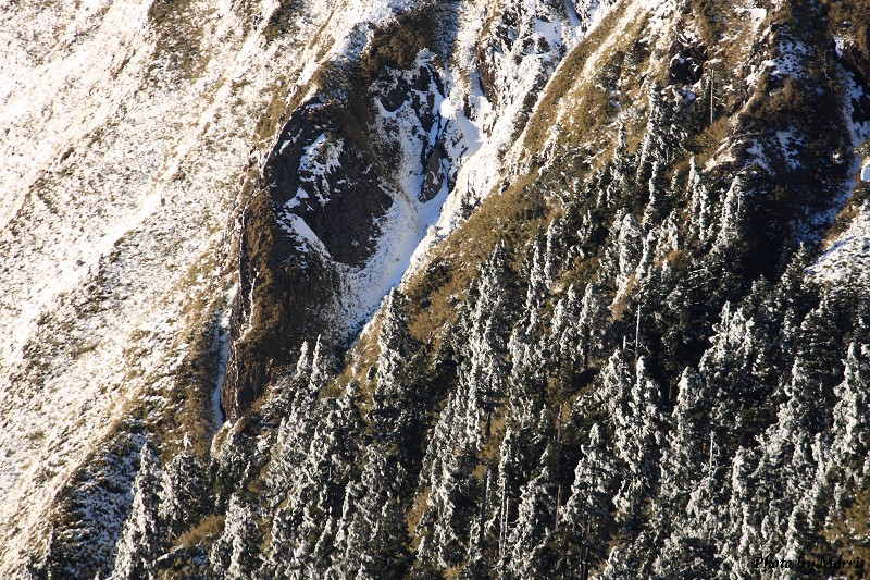 合歡山冬雪終曲 (43)
