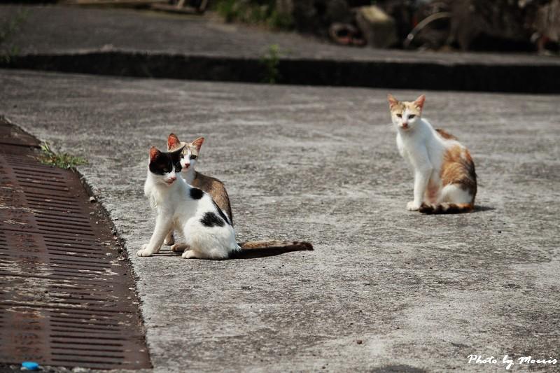 馬崗漁港拍貓看海 (28)