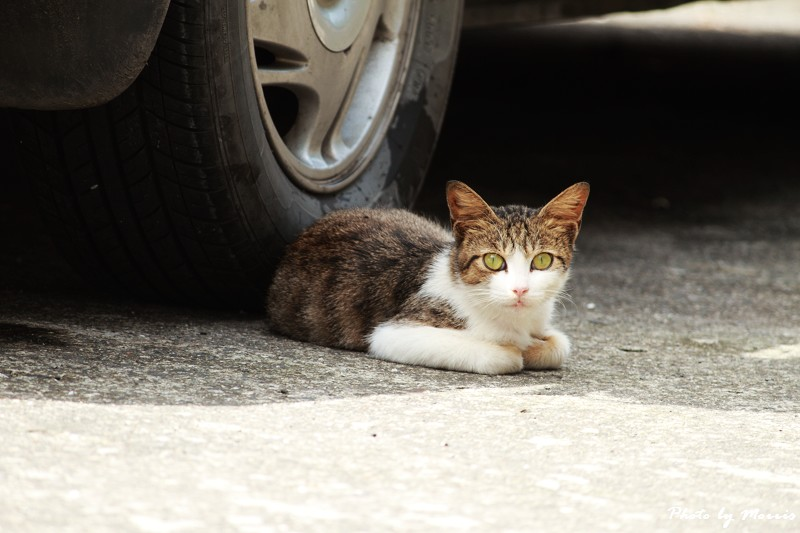 馬崗漁港拍貓看海 (13)