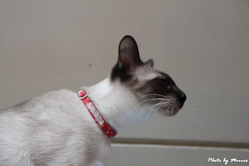 貓物語‧極簡咖啡 (18)